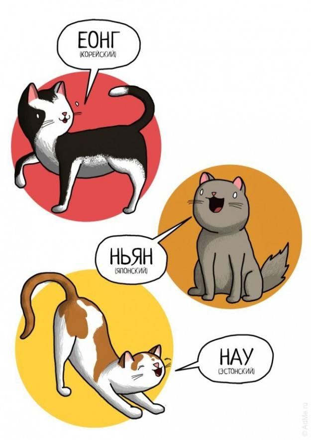 Кошачий язык: почему и как мяукают кошки