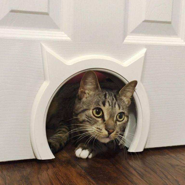 Дверка для кошек в дверь своими руками: автоматическая, межкомнатная
