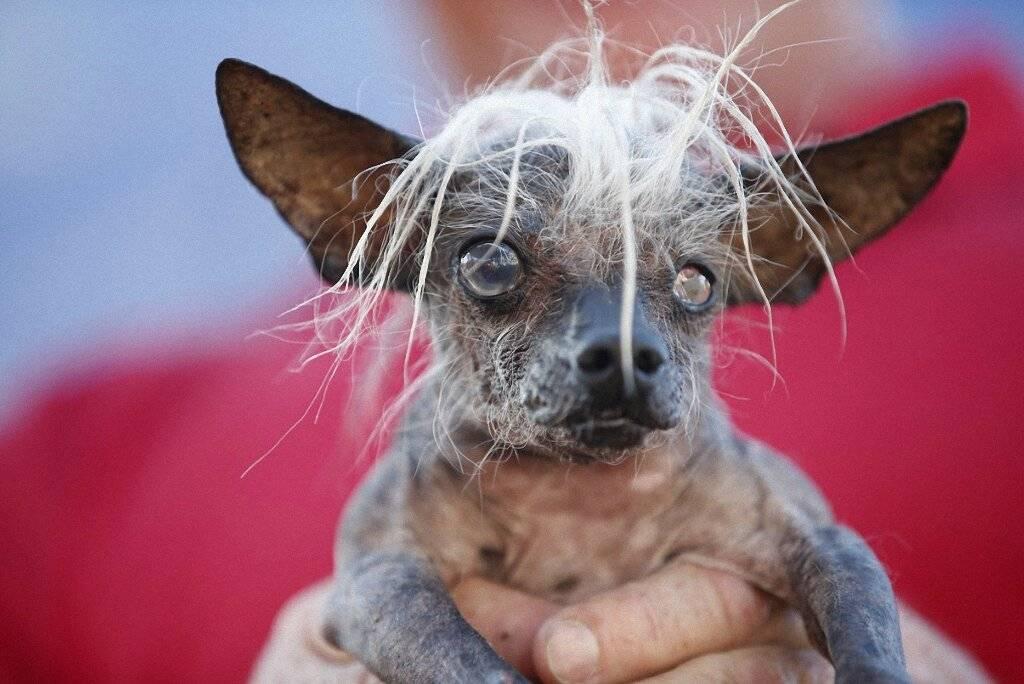 Самые злые собаки в мире: топ 10 пород — pet-mir.ru
