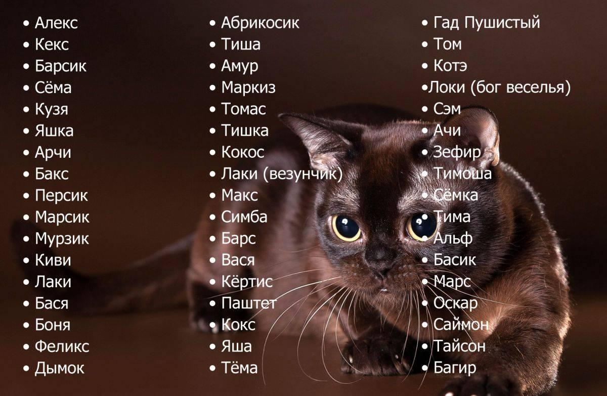 Ласковые клички для котов и кошек, красивые имена для мальчиков и девочек.