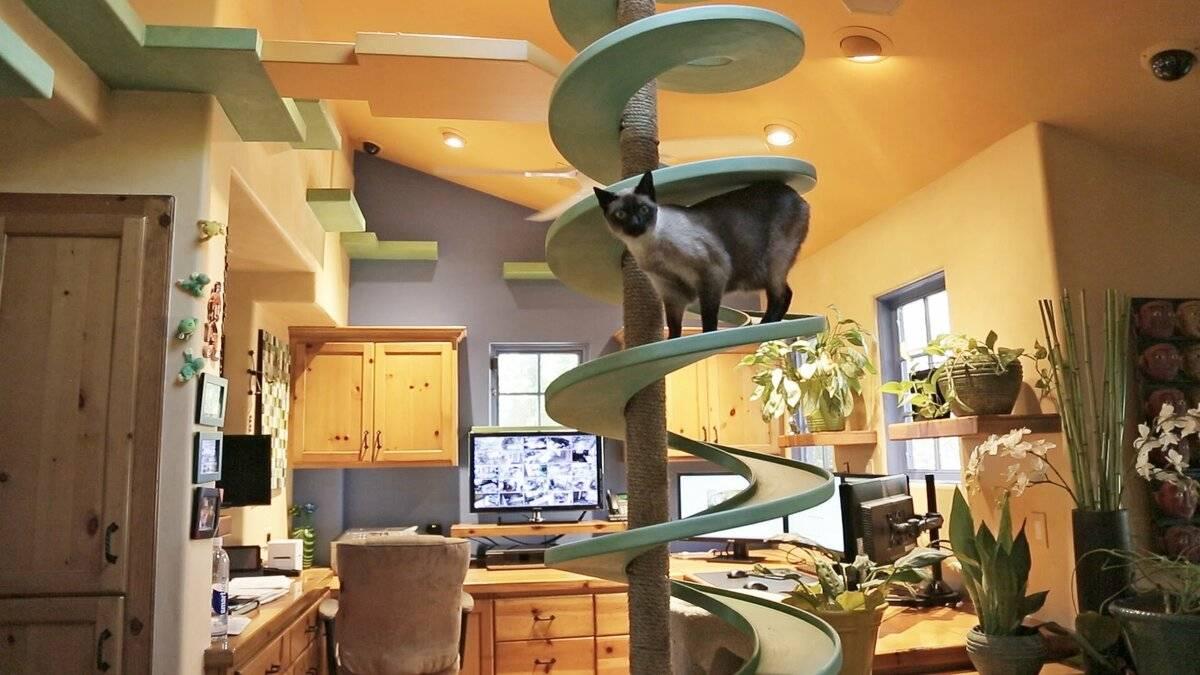 Обогащенная среда для кошек: нужна ли кошкам компания?