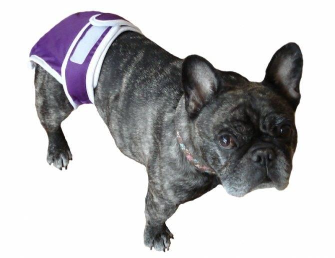 Памперсы для собак: какие лучше