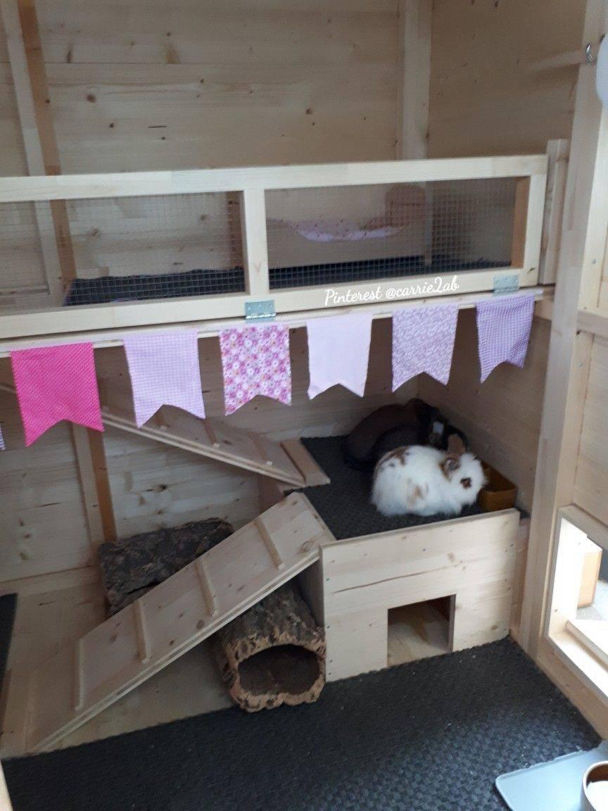 Домики для кролика: особенности выбора, обустройства и размещения
