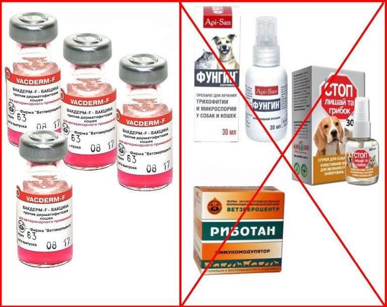 Вакдерм вакцина для кошек и собак. применение, побочные действия и цена вакдерма | животный мир