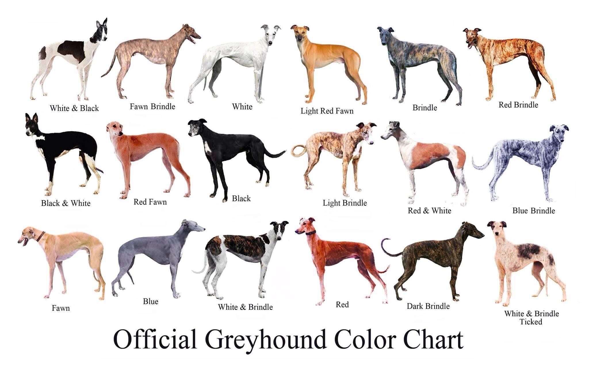 5 методов, как узнать породу собаки