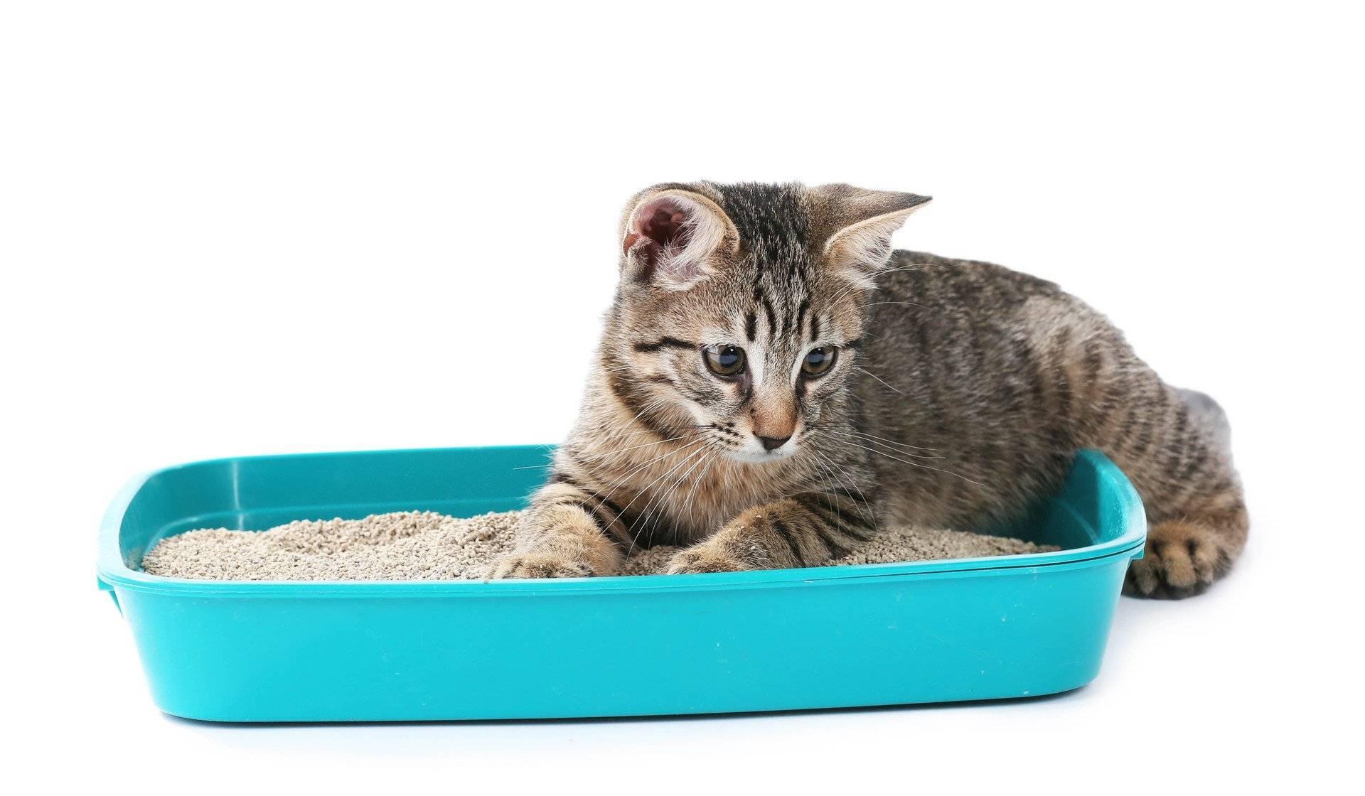 Почему кошка ходит в туалет мимо лотка и как отличить поведенческую проблему от заболевания