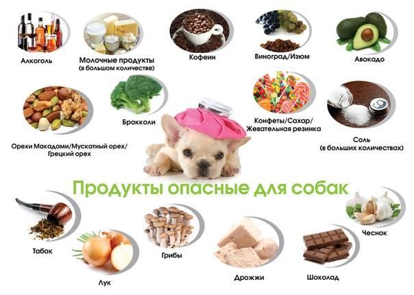 Ветеринарные специалисты дают рекомендации по кормлению кошек / новости города / сайт москвы