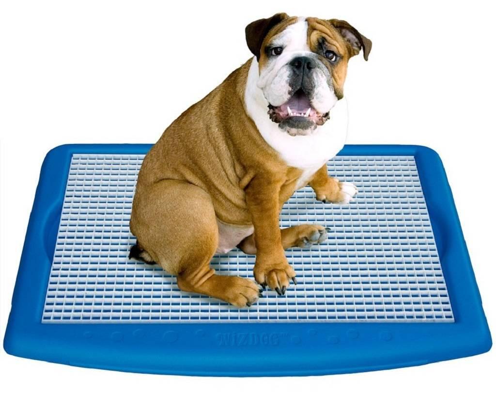 Лотки для собак: как приучить щенка и взрослую собаку к лотку со столбиком? как выбрать домашний туалет для собак мелких и крупных пород?