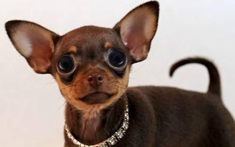 Топ-35 лучших пород собак для детей с фото | dogkind.ru