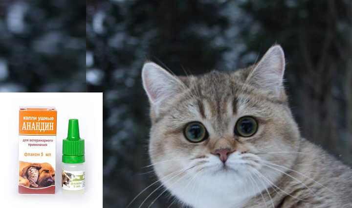 Чумка у кошек: симптомы и признаки (как проявляется), лечение, прививки - здоровье животных   сеть ветеринарных клиник, зоомагазинов, ветаптек в воронеже