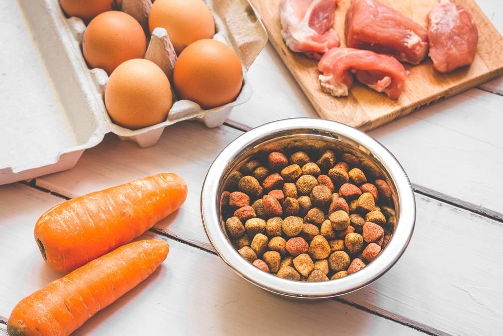 Продукты, которыми нельзя кормить котов и собак