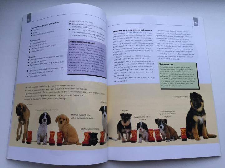 Пошаговое руководство по дрессировке щенков от рождения для начинающих