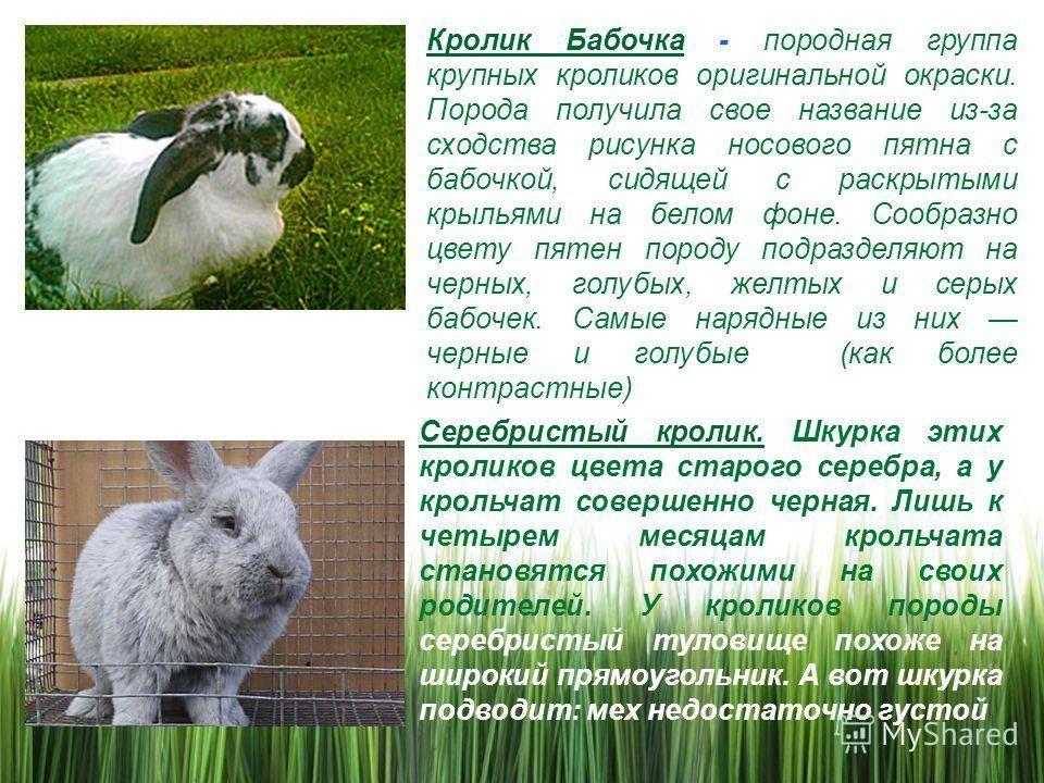 Виды ангорских кроликов, особенности их разведения и содержания в 2021 году