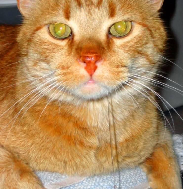 "У кошки (кота) пахнет изо рта: причины, диагностика, лечение, профилактика | блог ветклиники ""беланта"""
