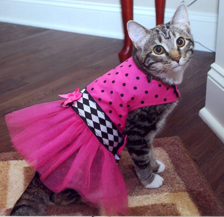 Нужна ли одежда кошкам?