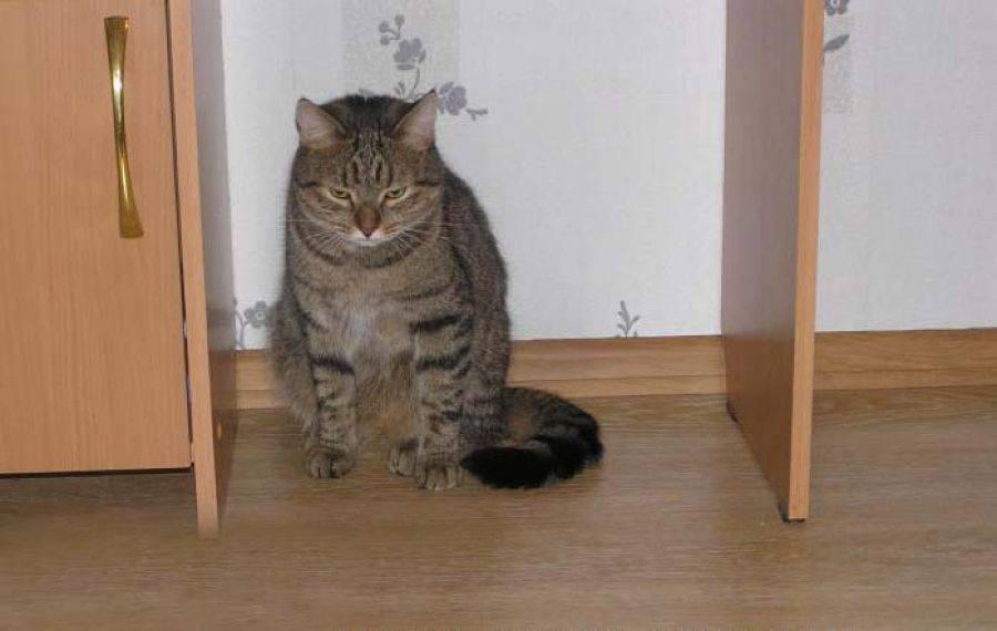 Как наказать кота за плохое поведение чтобы он понял