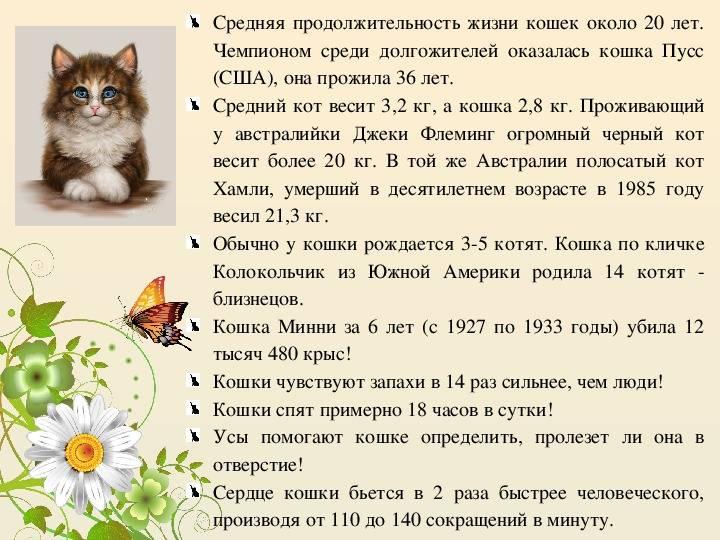 Сколько живут сфинксы кошки в домашних условиях