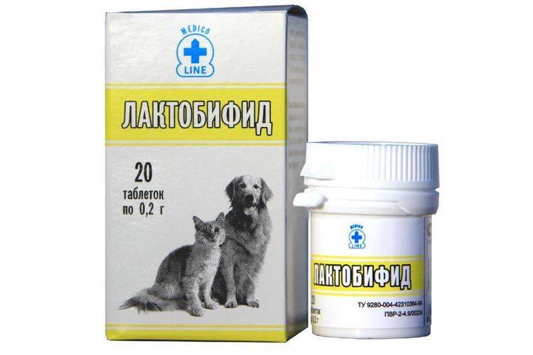 Лактобифид для собак: инструкция по применению, преимущества и противопоказания