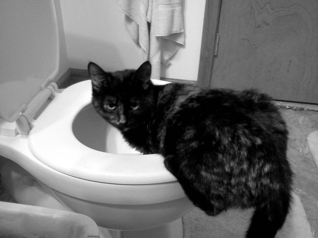 Можно ли вылечить паралич у кошек