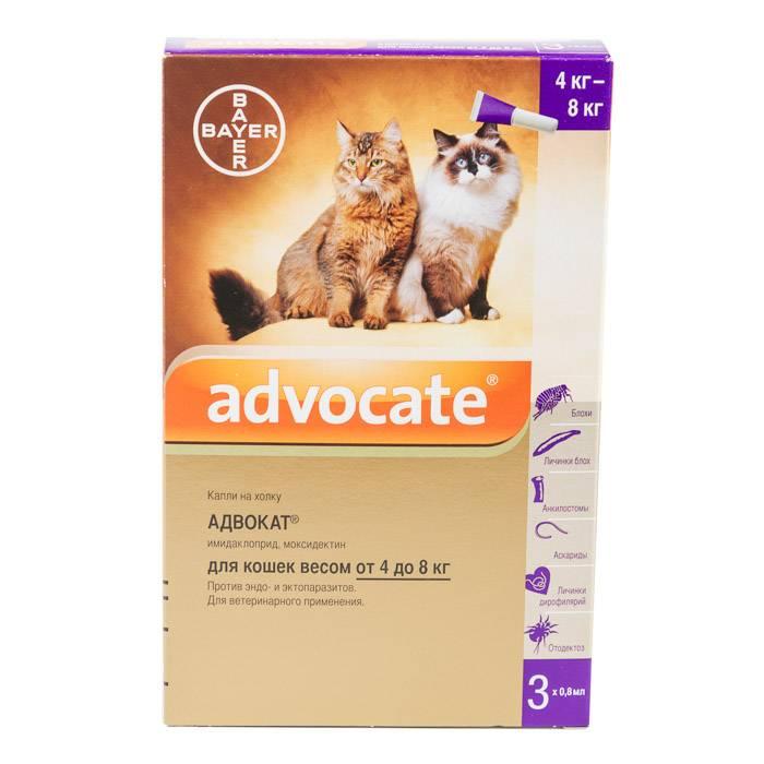 Капли на холку «advocate» для кошек: инструкция по применению