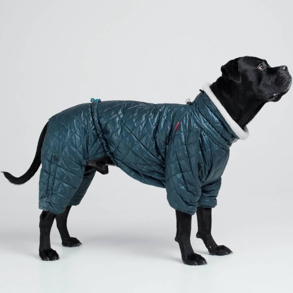 Классификация пород собак по размерам и по версии мкф, самые популярные собаки