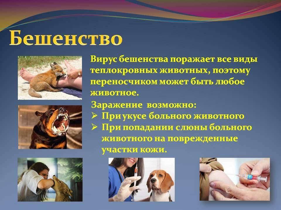 Бешенство у собак: признаки и профилактика