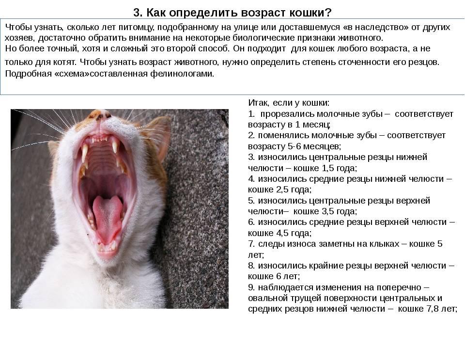 Беременность у кошек: признаки, протекание беременности, уход