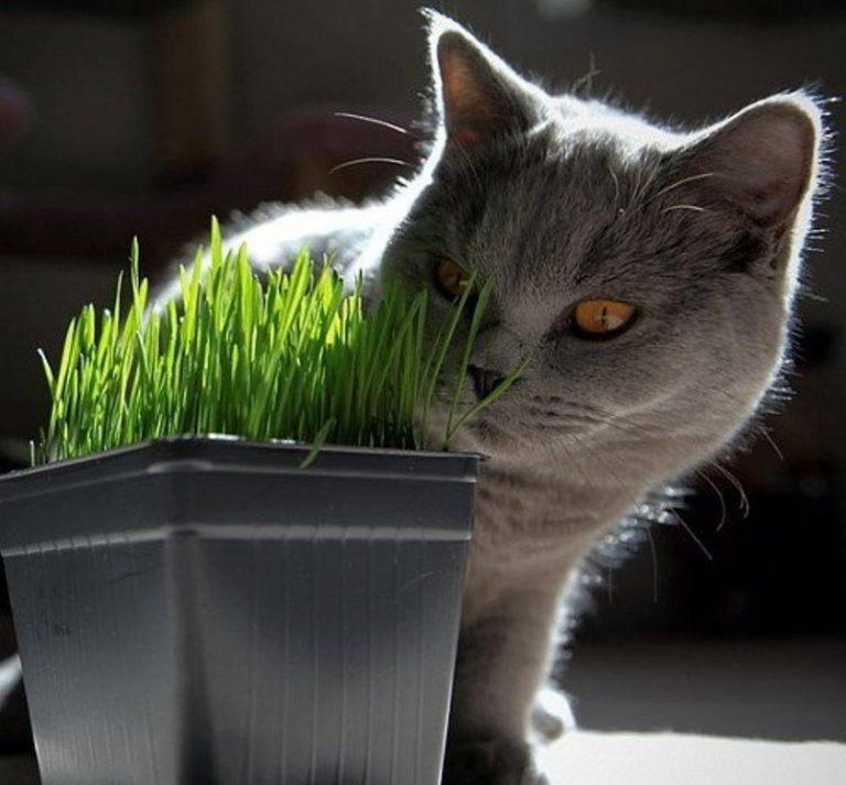 Какую траву любят и едят кошки и коты | какую посадить дома