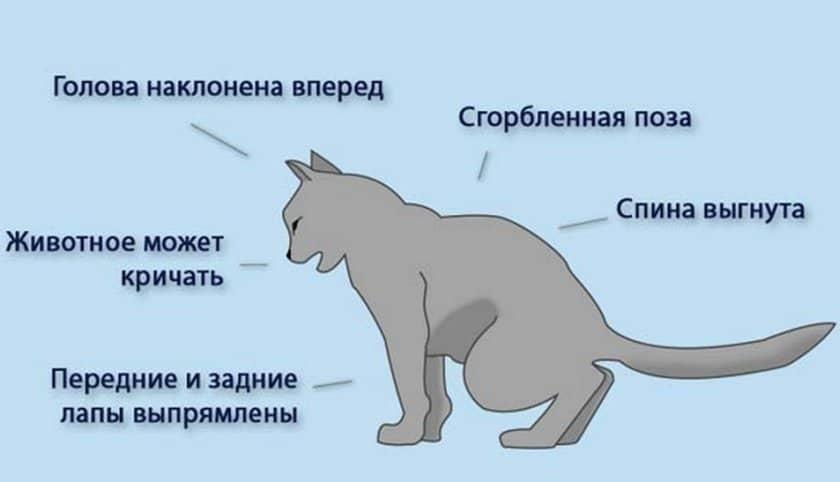 Вязка кошек: возраст кошек и котов, подбор партнера, правила, видео