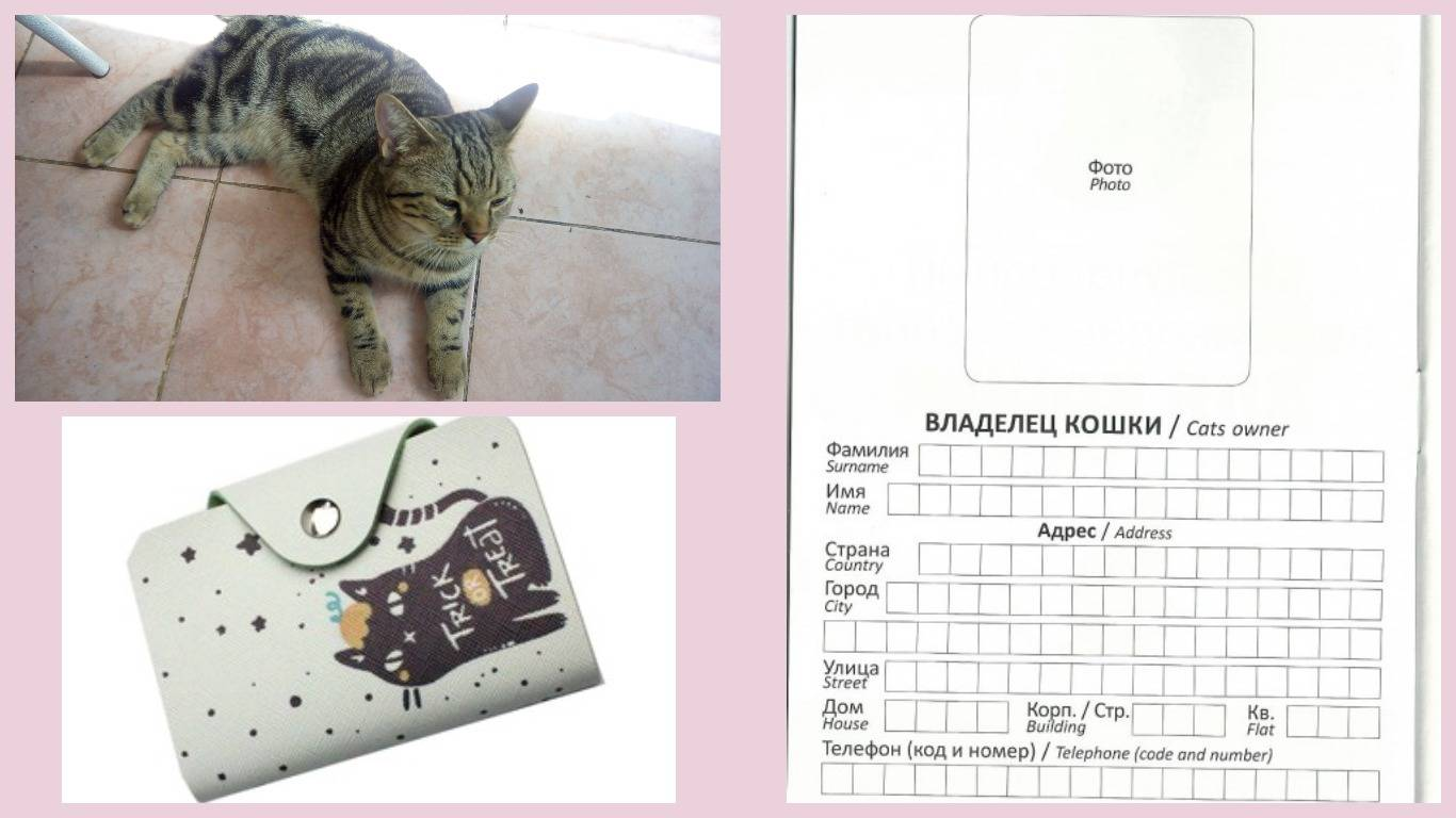 Оформление ветеринарного паспорта для кошки: особенности, как сделать