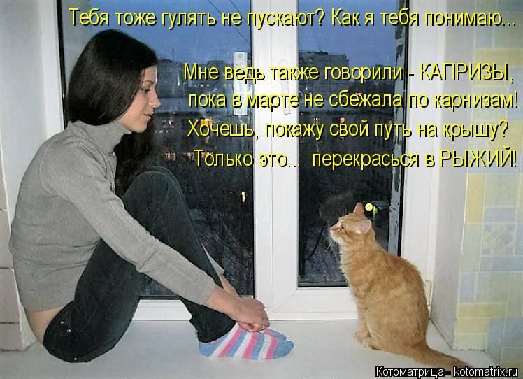 Узнайте в каких случаях и как кошки говорят со своими хозяевами