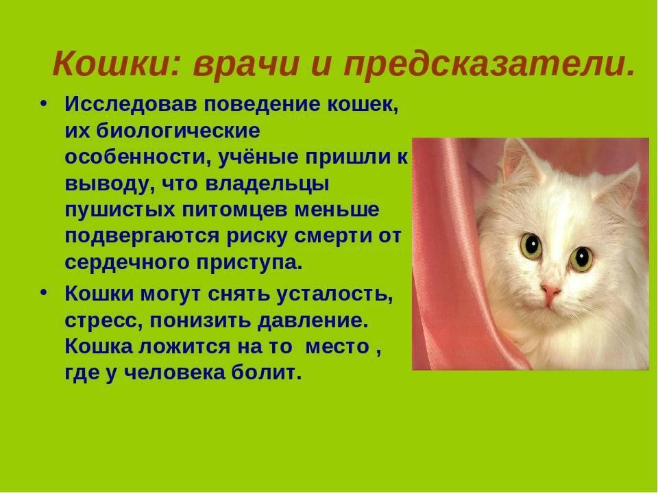 Стерилизация кошек: как проходит и в каком возрасте делать