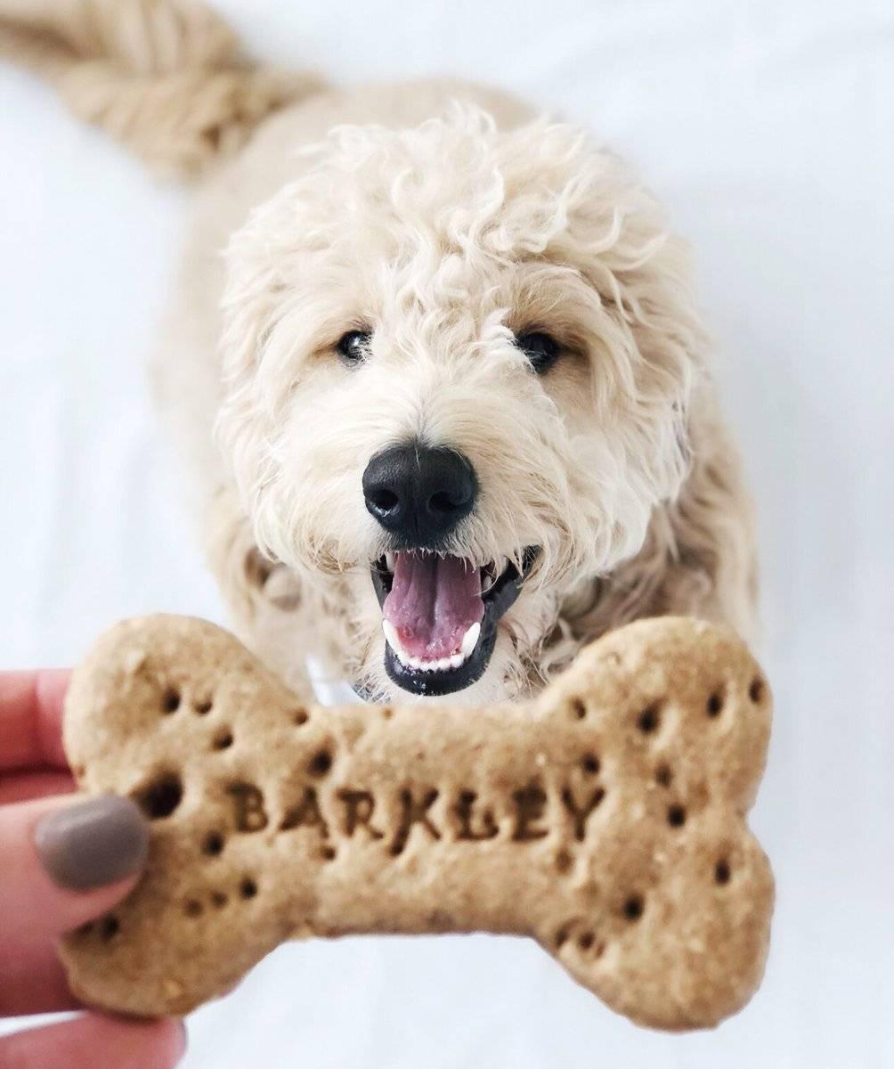 Готовим лакомство для собак своими руками: рецепты из печени и лёгкого и бульона