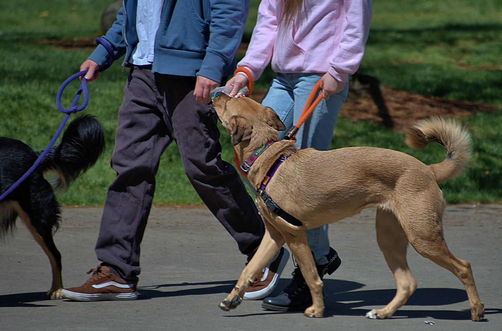 Общий курс дрессировки собак без тренера самостоятельно