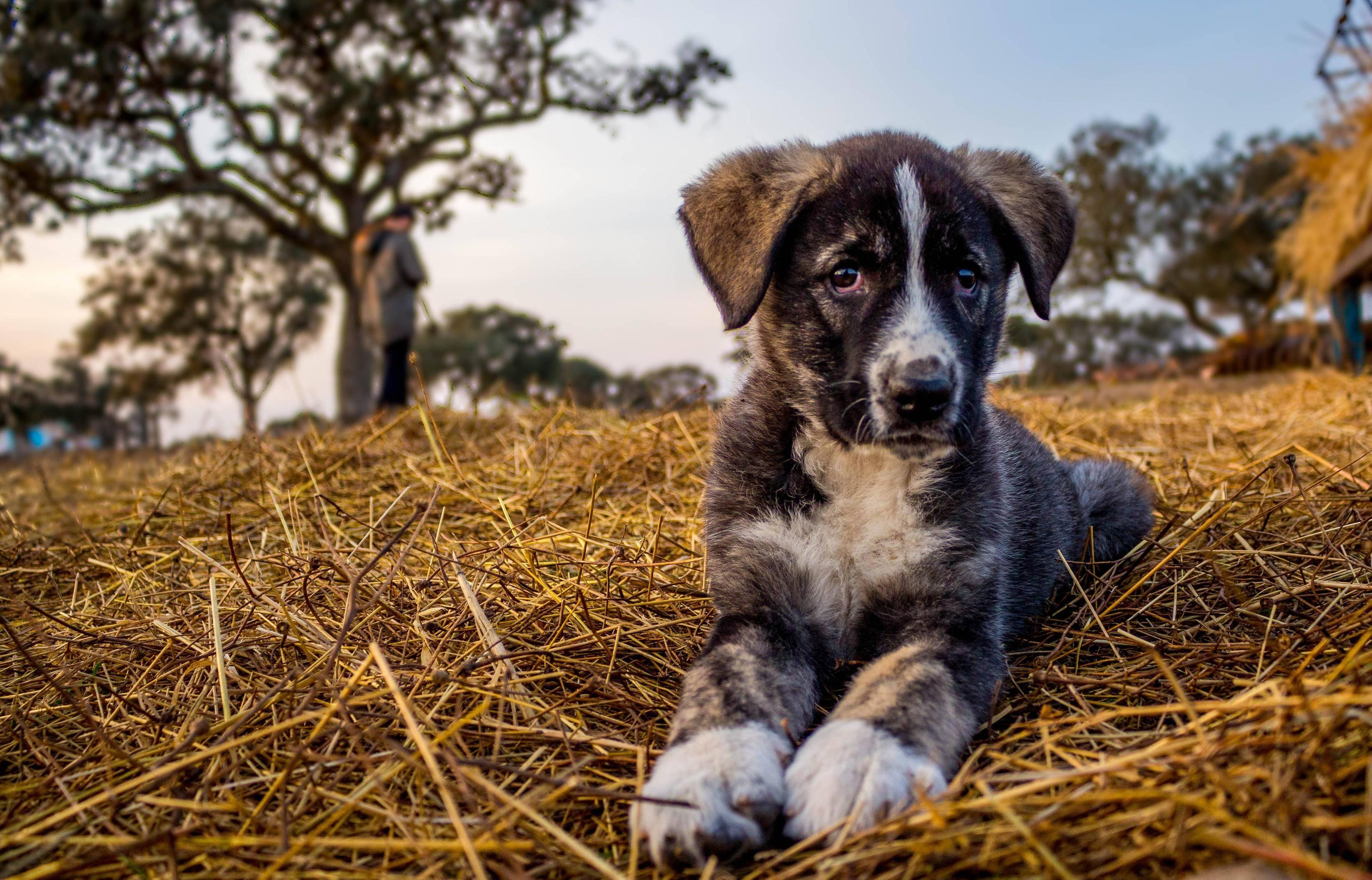 Рафейру ду алентежу.характеристика и описание породы (с фото) | все о собаках