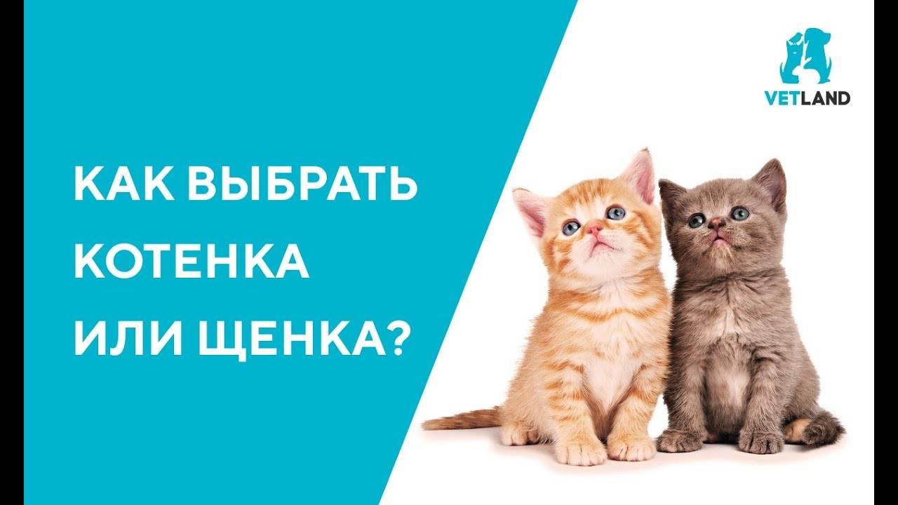 Как правильно выбрать котенка   мальчика и девочку