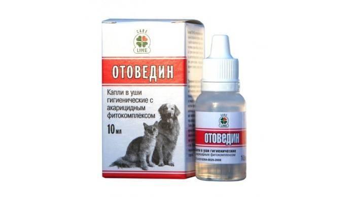 Лекарство от ушного клеща у кошек: лечение, эффективные препараты