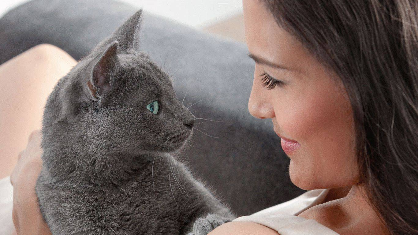 Как и почему мурлыкают кошки?
