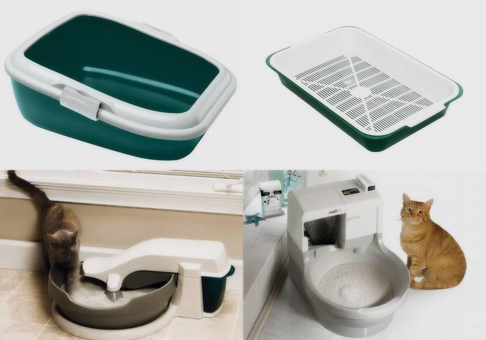Как приучить щенка к туалету: действенные и эффективные методы