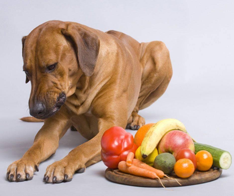 Лишний вес и ожирение у собак и кошек. как перестать перекармливать питомцев