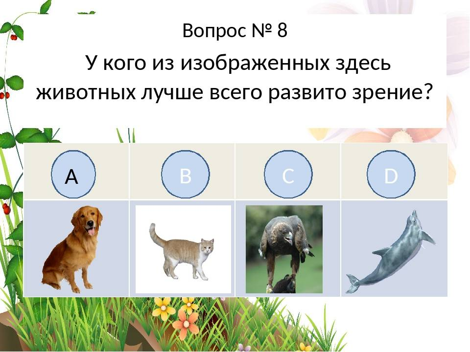 Как видят собаки и различают ли цвета?