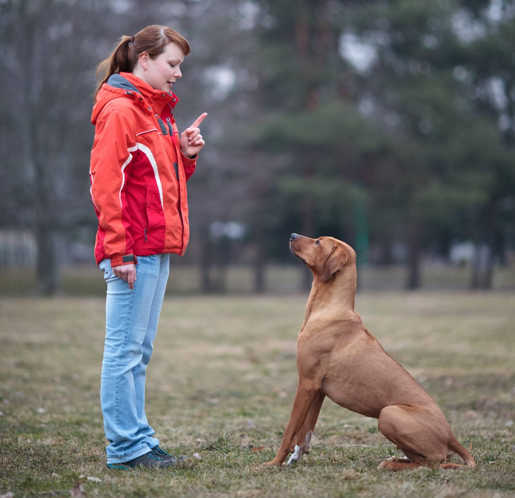 Почему хозяин должен быть «вожаком» для своей собаки