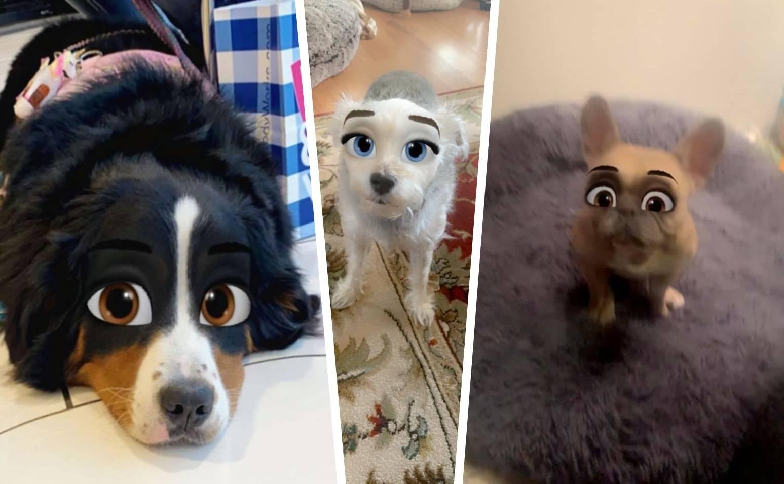 Топ-10 самых популярных собак в инстаграме
