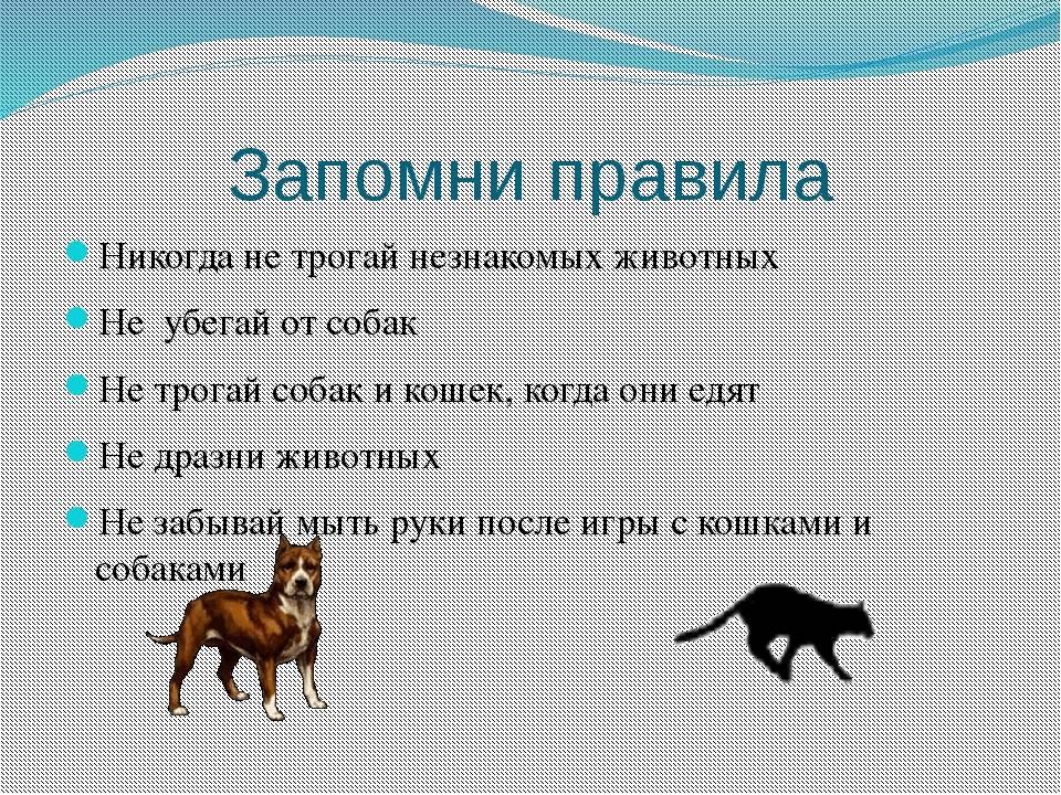 Как правильно общаться с щенком или собакой?