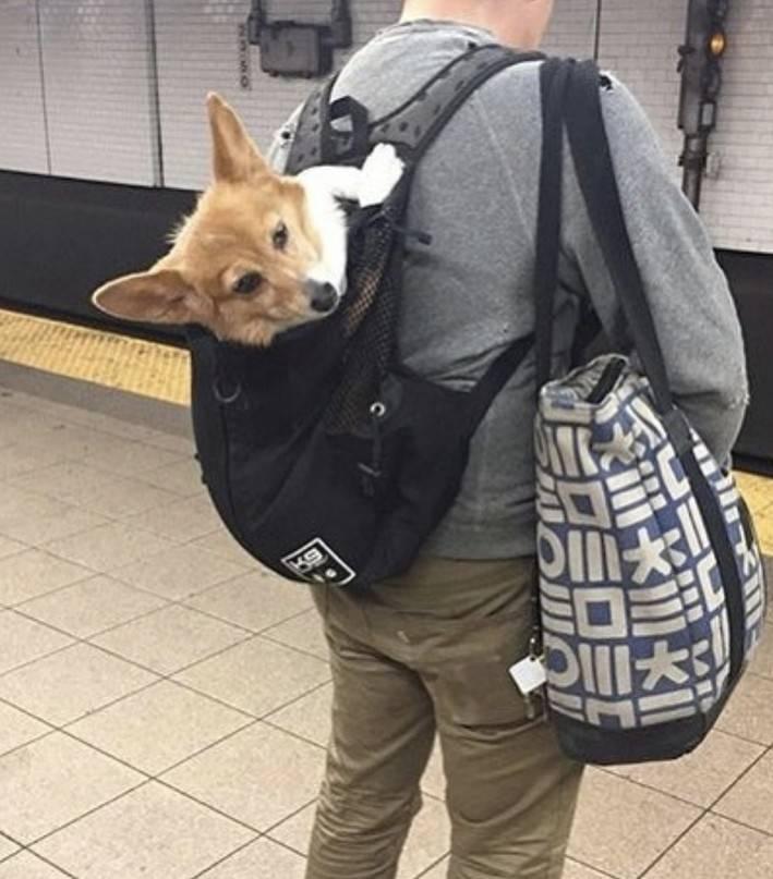 Правила перевозки собак 2020: в поезде, самолете, автобусе, электричке, авто | petguru