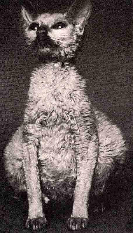 Энтерит у кошки - виды энтеритов, симптомы и лечение