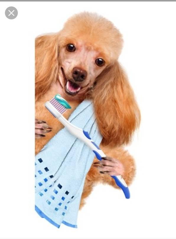 Как и чем правильно чистить зубы собаке?