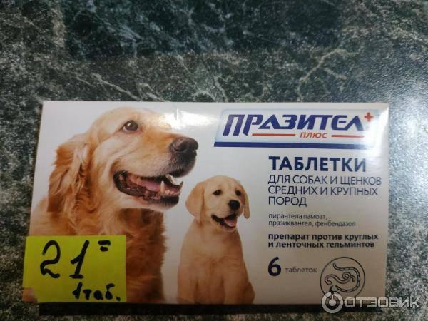Празител для собак: инструкция по применению