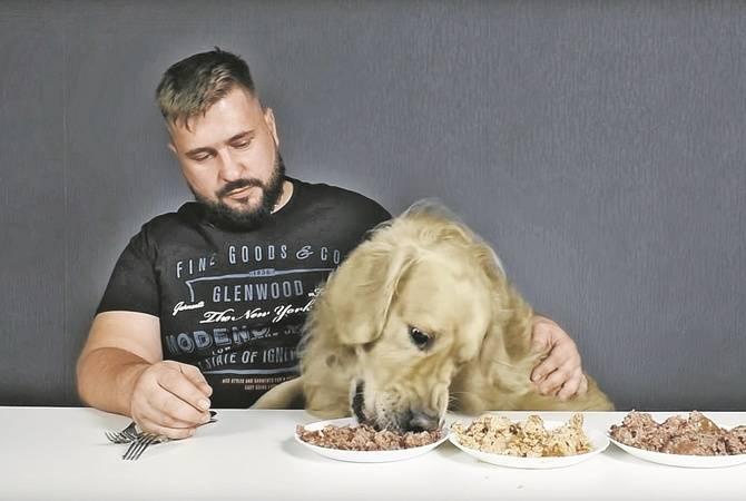 Щенок плохо ест сухой корм: что делать в такой ситуации