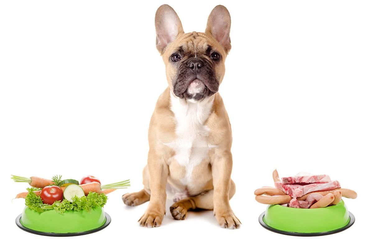 Можно ли давать собаке кашу?